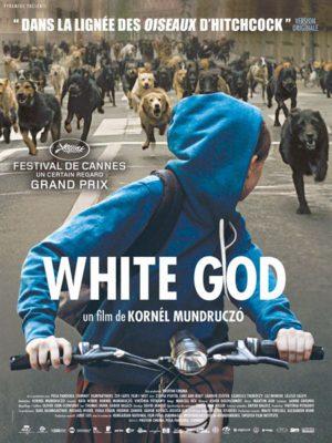 Affiche du film white god